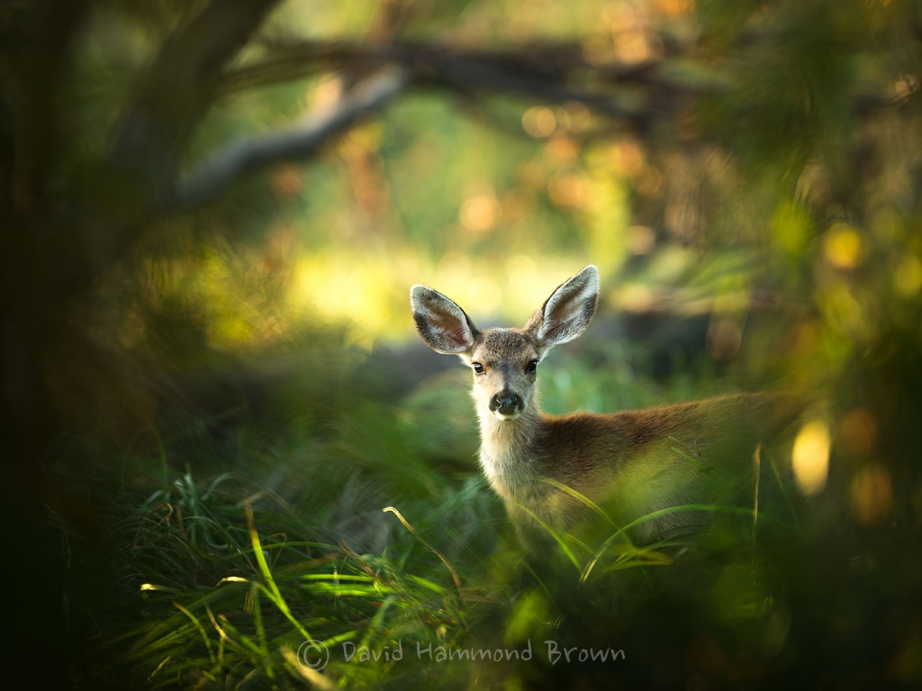 David Hammond Brown Photography - Beauty