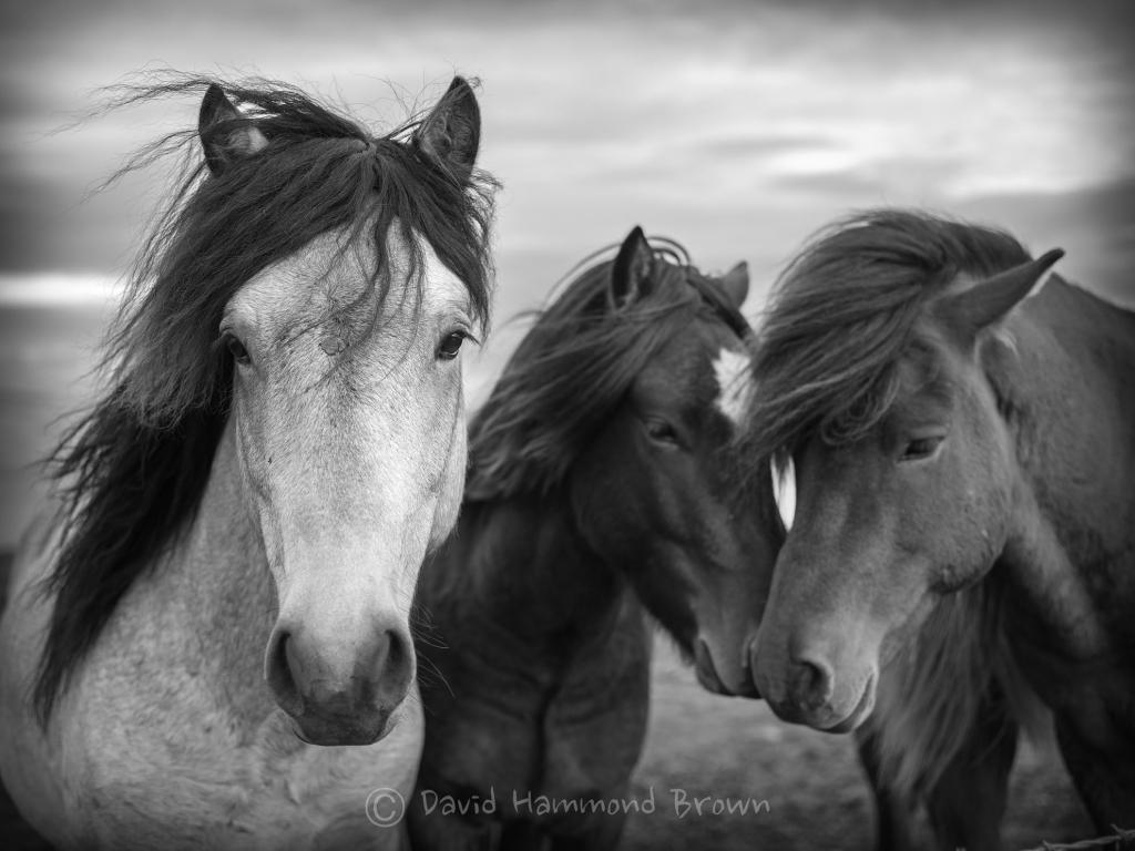 David Hammond Brown Photography - Diversitity