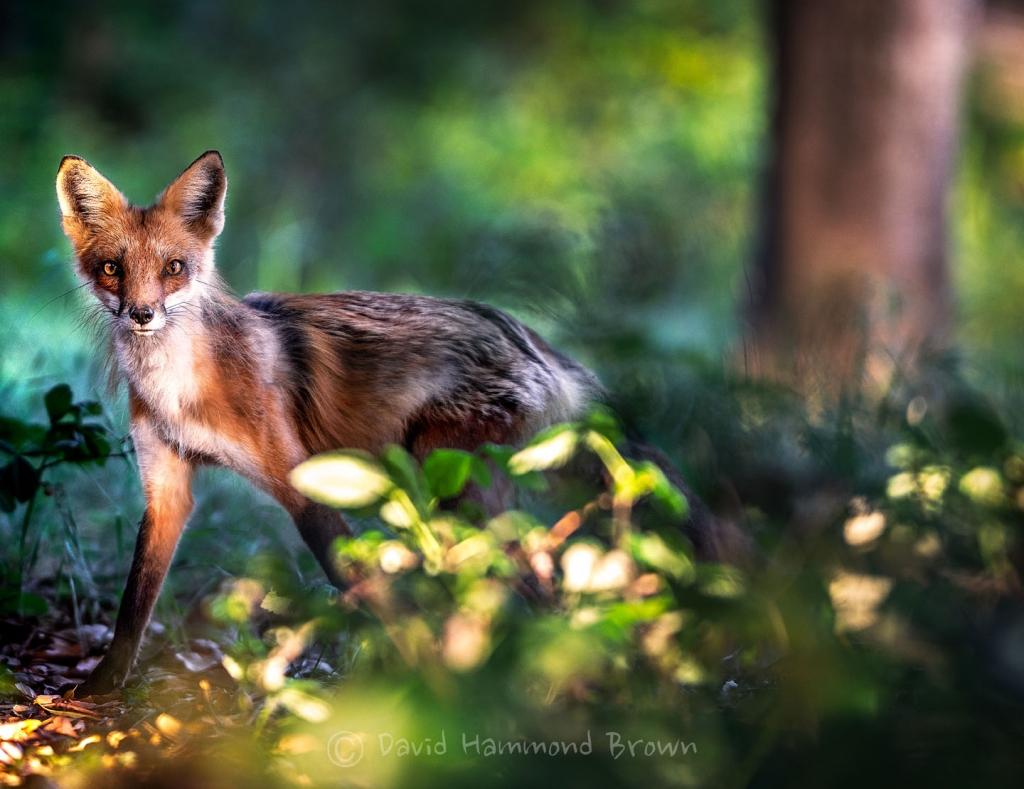 David Hammond Brown Photography - Finally