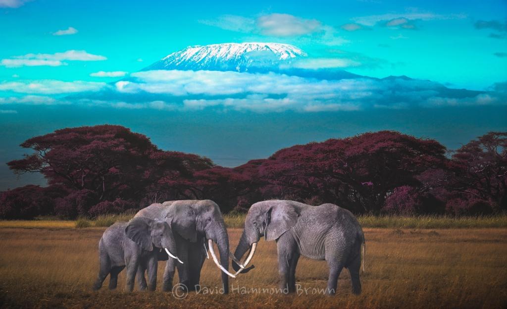 David Hammond Brown Photography - Kenya