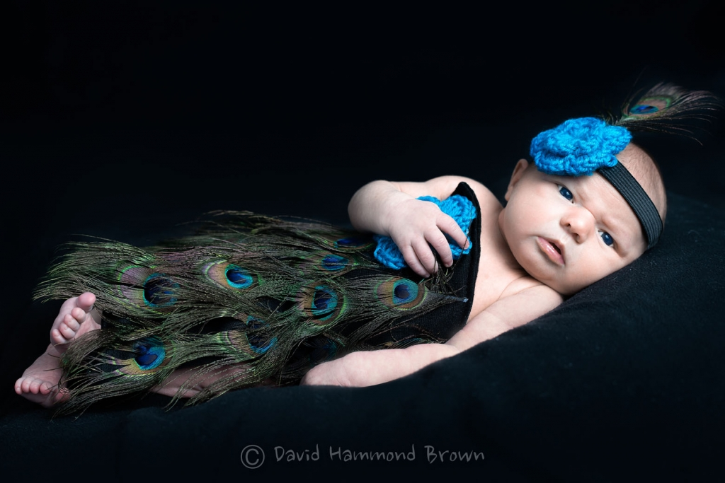David Hammond Brown Photography - Little Peacock