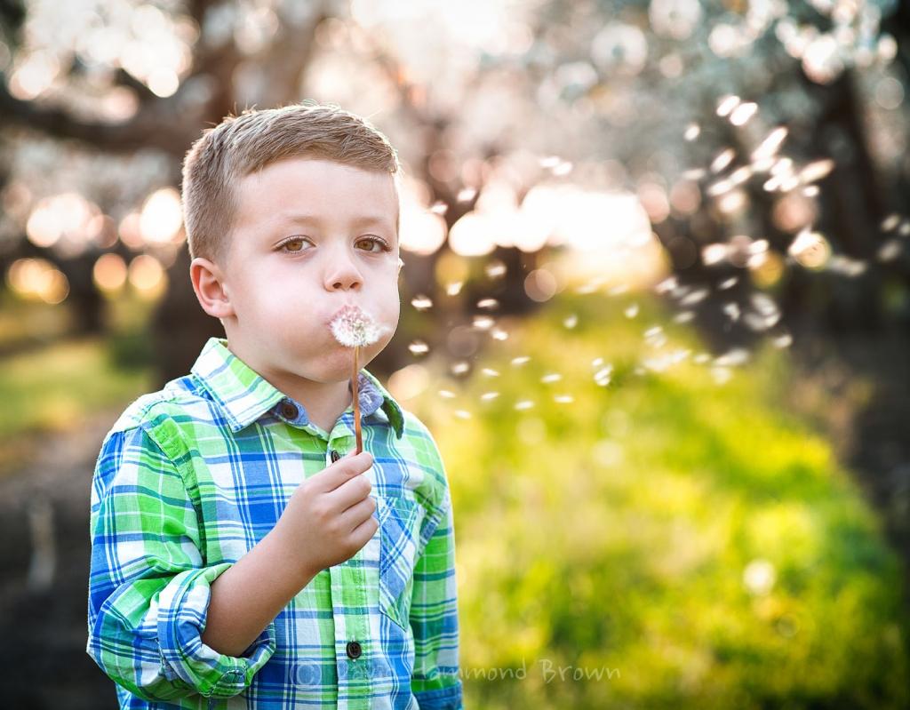 David Hammond Brown Photography - Make A Wish