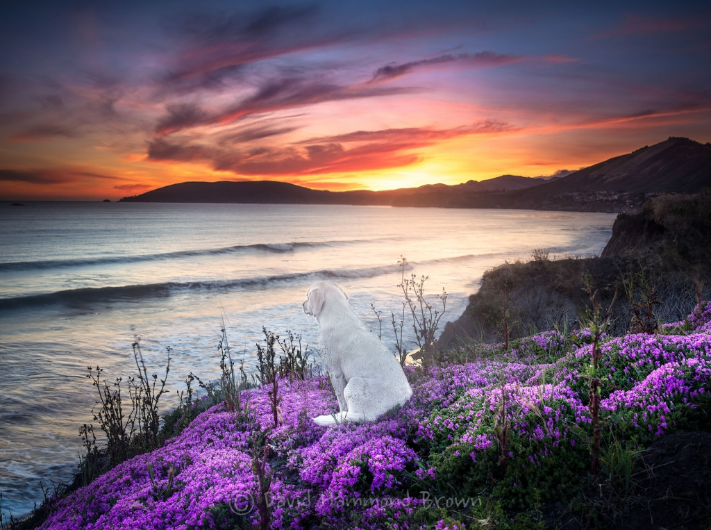 David Hammond Brown Photography - Watching Sunset